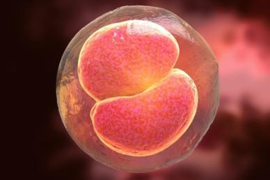 Blastocyst Embryo Transfer